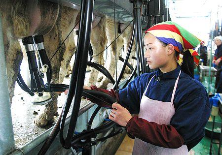China Dairy Farming