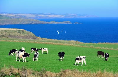 new zealand sustainable dairy farm The dairy industry alone is now responsible for about half of all emissions from agriculture, or 22% of new zealand's total between 1990 and 2015, emissions from dairying rose by 130% but were partially offset by a drop in sheep and beef cattle numbers.
