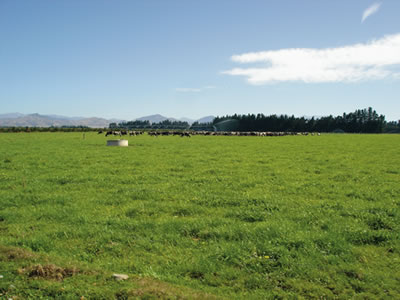 Dairy Farming in New Zealand New Zealand's True Dairy