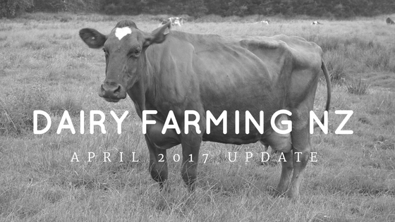 Photo of cow for Dairy Farming april 2017 blog
